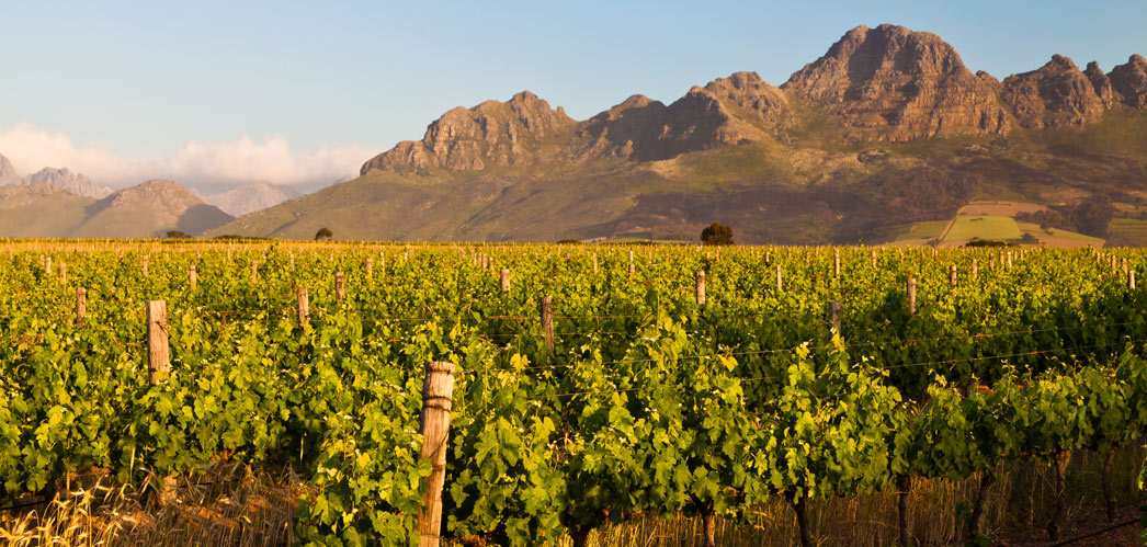Accommodation Activities in the Cape Winelands, Western Cape, South Africa, www.cape-winelands-info.co.za