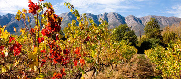 Tulbagh is in the winelands of the Boland in the Western Cape Province, South Africa.